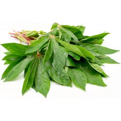 Tapioca Leaves Bundle