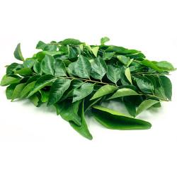 Curry Leaves Bundle